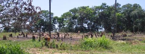 Abgeholzte Stelle im Ybytyruzú