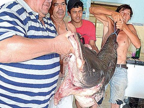 Surubi 68 kg 2 (UH)