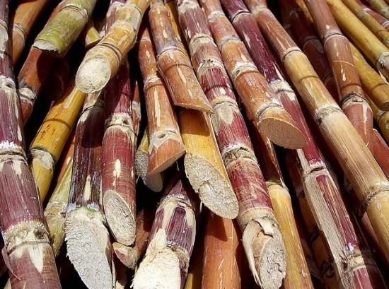 640px-Cut_sugarcane