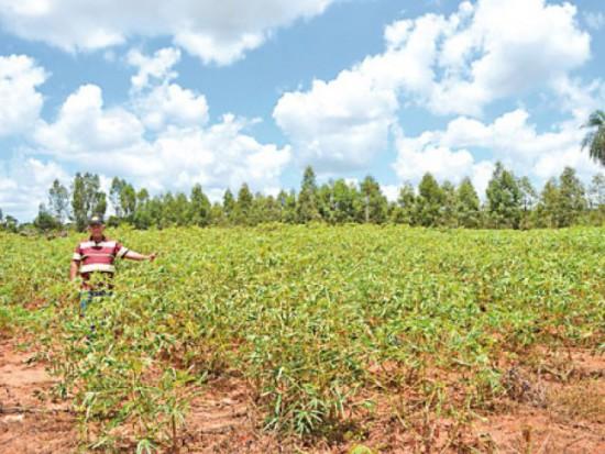 agricultor-denuncia-enorme-perjuicio-causa-veneno