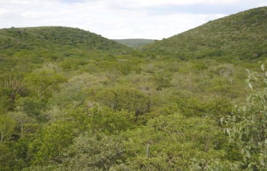 Cerro León