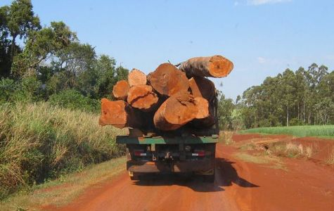 Campesinos bedrohen Polizisten, die erneut zwei Lkws mit geraubtem Holz sicherstellten