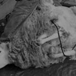 Paraguay exportiert nun auch Schafwolle nach Uruguay