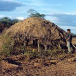 Beweisfotos illegaler Abholzung: Viehzüchter angeklagt