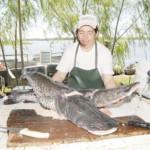 Kommende Schonzeit verbilligt diverse Fischarten