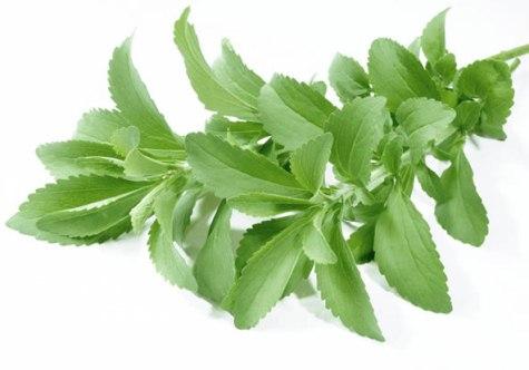 Europäisches Parlament erlaubt den Gebrauch von Stevia