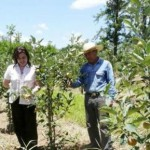 Erste Apfelernte in La Colmena