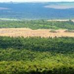 Über 1.000 Polizisten räumen Grundstück