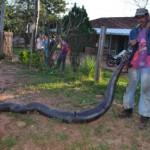 Riesenschlange sorgt für Aufruhr