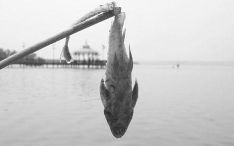 der fisch stinkt am kopf