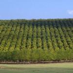 Paraguayischer Orangensaft auch bald in Deutschland