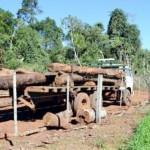 Witwe eines Österreichers holzt mit staatlicher Erlaubnis über 1.000 ha Wald ab