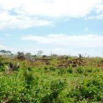 Waldrodungen sind in Caaguazú kaum noch aufzuhalten