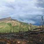 Abholzung im Osten geht zurück