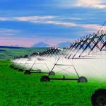 Ohne Agrochemikalien 50% weniger Ertrag