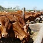 EU gibt grünes Licht für den Fleischexport