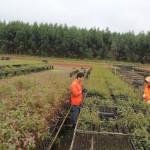 Forstunternehmen plant weitere Investitionen