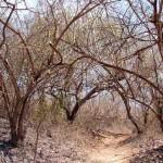 Palo Santo Studie im Chaco