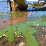 Ypacaraí See verfällt immer mehr