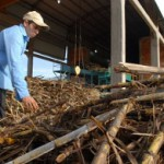 Petropar kauft große Mengen Zuckerrohr