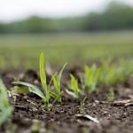 Syngenta schlägt Angebot von Monsanto aus