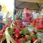 Aregua: Willkommen im Erdbeerland