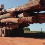 Entwaldung mit Billigung der INFONA