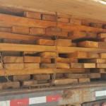 Illegaler Holzeinschlag im Schutzgebiet