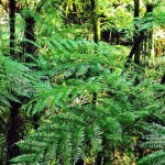Neues Naturschutzgebiet Yberá im Gespräch