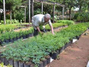 Heipflanzen