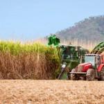 Monsanto zieht sich aus dem Zuckerrohrsektor zurück
