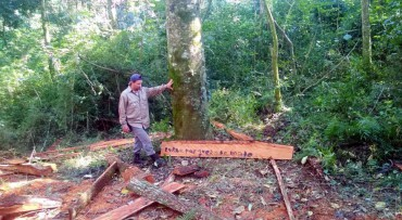 Entwaldung in mehr als 24 Nationalparks