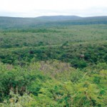 Gericht gibt Cerro Leon zur Nutzung frei
