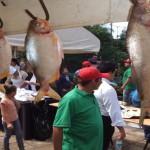 Wachsende Fischzucht in Teichen