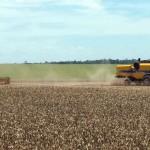 24 Millionen Kilo Herbizide importiert