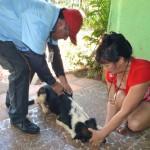 Rinder Tollwut in San Pedro