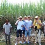 Deutsche Touristen entdecken das Zuckerrohr