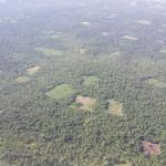 Marihuana Plantage im Schutzreservat