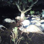 Blitzschlag tötet 20 Tiere in Quiindy