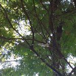 Baum, der Eis produziert, sorgt für Aufregung