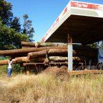 Haft für illegalen Waldschlag