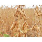 Landwirtschafts-ministerium warnt vor Frost