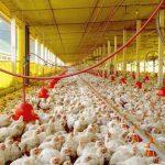 Das Henne-Ei Problem!