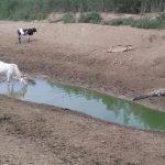 Krokodile und Fische sterben am Pilcomayo
