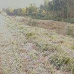 Frost ist günstig für die Weizenernte in Itapúa