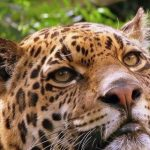 Einwohner von Ybycuí und Acahay in Gefahr