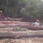 Eigentümer machtlos gegen Campesinos