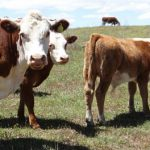 Viehzüchter mit Problemen im Chaco