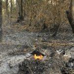 Neue Waldbrände registriert