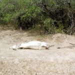 Die Sorgen der Bewohner im Chaco